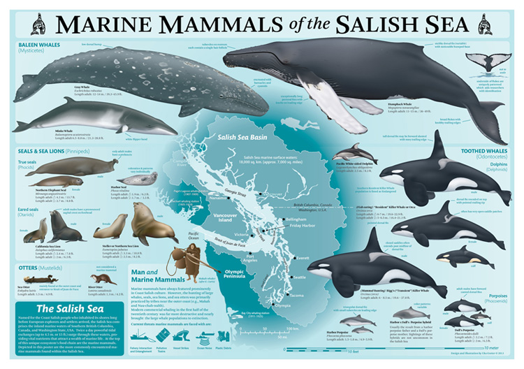 Marine Mammals of the Salish Sea